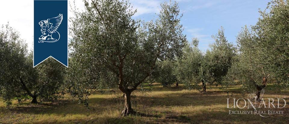 Agriturismo in Vendita a Rosignano Marittimo: 0 locali, 650 mq - Foto 5