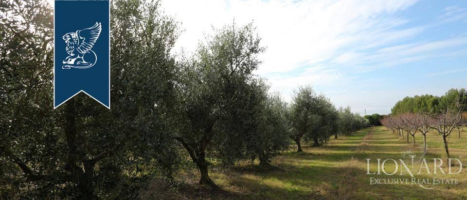 Agriturismo in Vendita a Rosignano Marittimo: 0 locali, 650 mq - Foto 4